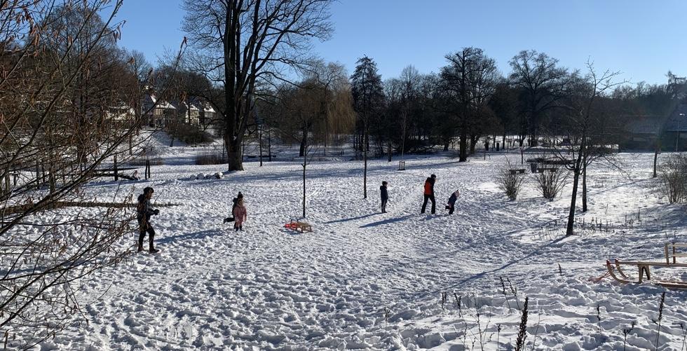 Bevers spelen in de sneeuw